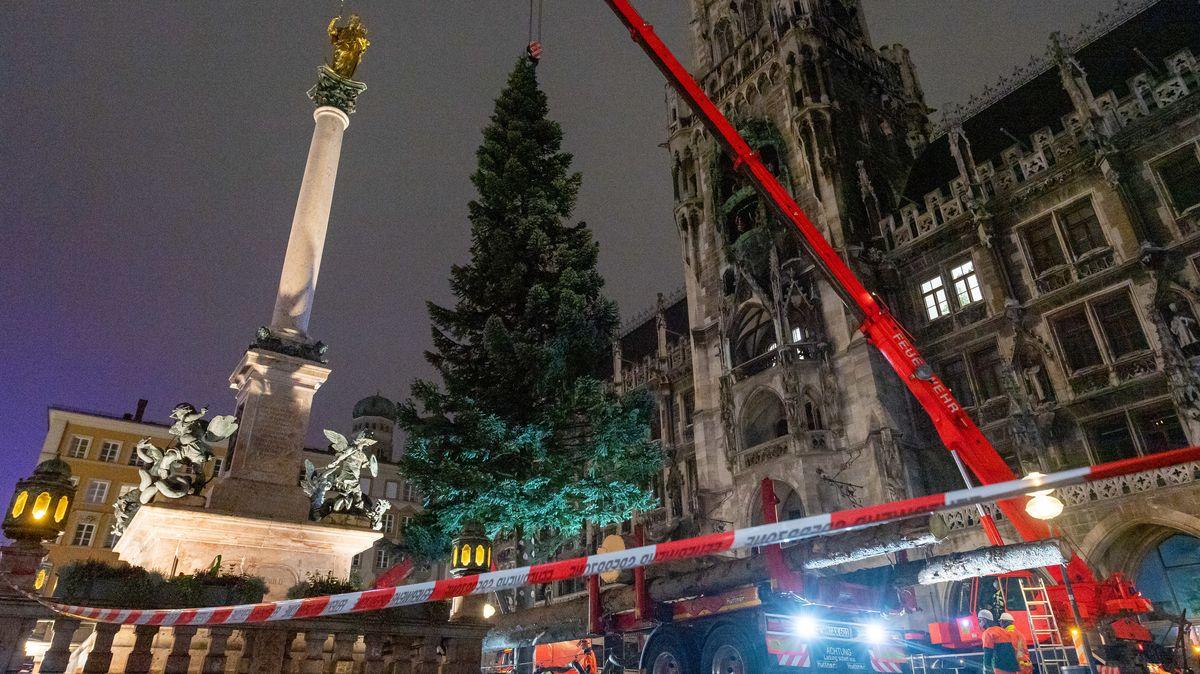 Mitarbeiter der Stadtwerke und der Münchner Berufsfeuerwehr stellen auf dem Marienplatz den neuen Christbaum mit einem Kran auf