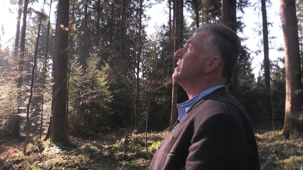 Der Vorstand der Waldbesitzervereinigung Holzkirchen, Michael Lechner, blickt sorgenvoll in den Wald
