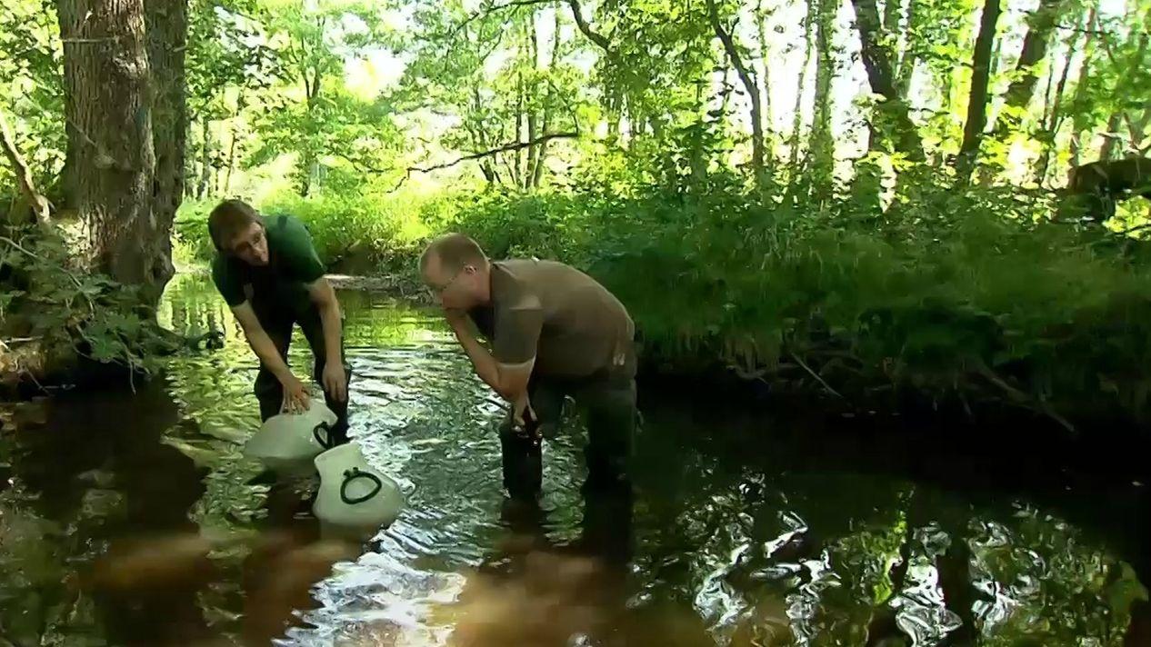 Bund-Naturschutz-Mitarbeiter arbeiten in einem Fluss