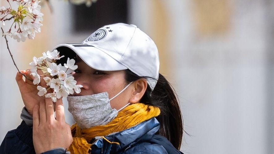Ein Frau trägt einen einfachen Mundschutz riecht am Elbufer an den Blüten einer Zierkirsche.