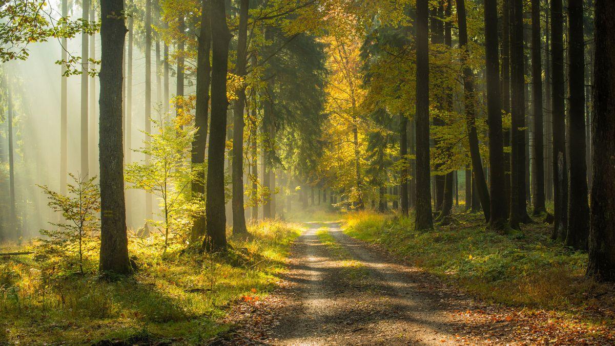 Ein Waldweg im Spessart