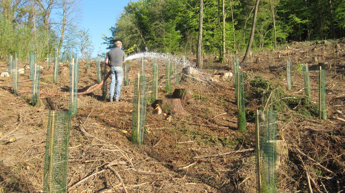 Die Bewässerung von Jungpflanzen ist ein großer Aufwand für die Waldbesitzer. Seit April wird diese Arbeit finanziell unterstützt.