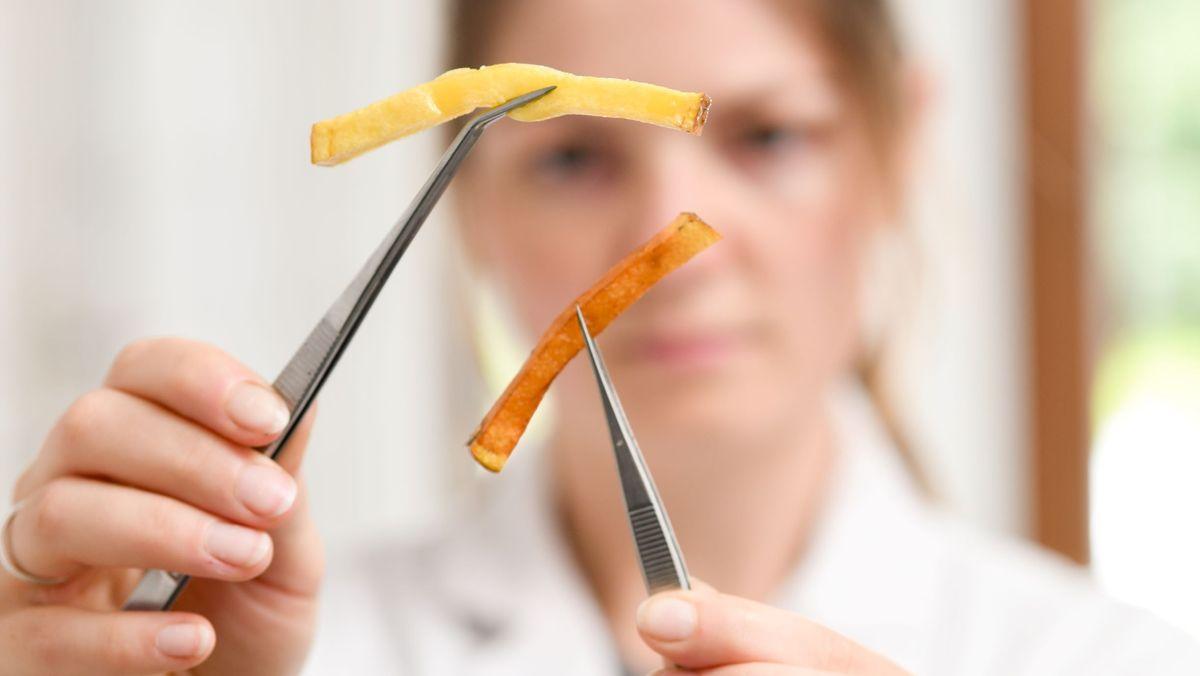 Eine Wissenschaftlerin hält zwei unterschiedliche Pommes mit der Pinzette.