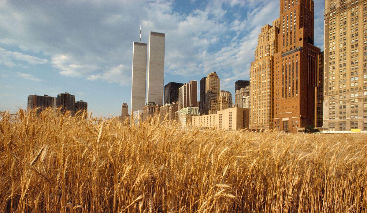 Ein Foto, auf dem ein gigantisches Weizenfeld der Battery Park in Downtown Manhatten konfrontiert wird mit den Wolkenkratzern des Finanzdistrikts