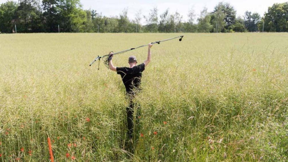 Soundkünstler Marcus Maeder geht durch sehr hohes Gras und hält über seinem Kopf ein Mikrofon auf einem Stativ.