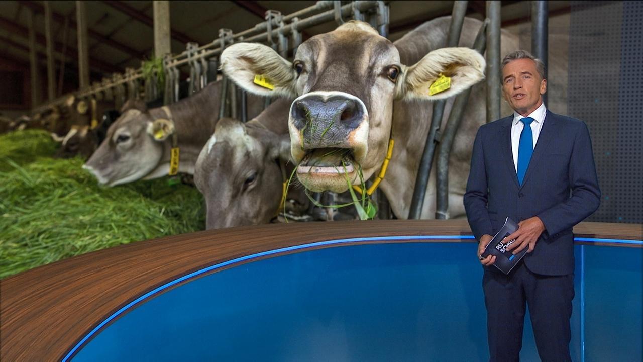 Stefan Scheider vor Foto einer Kuh im Stall