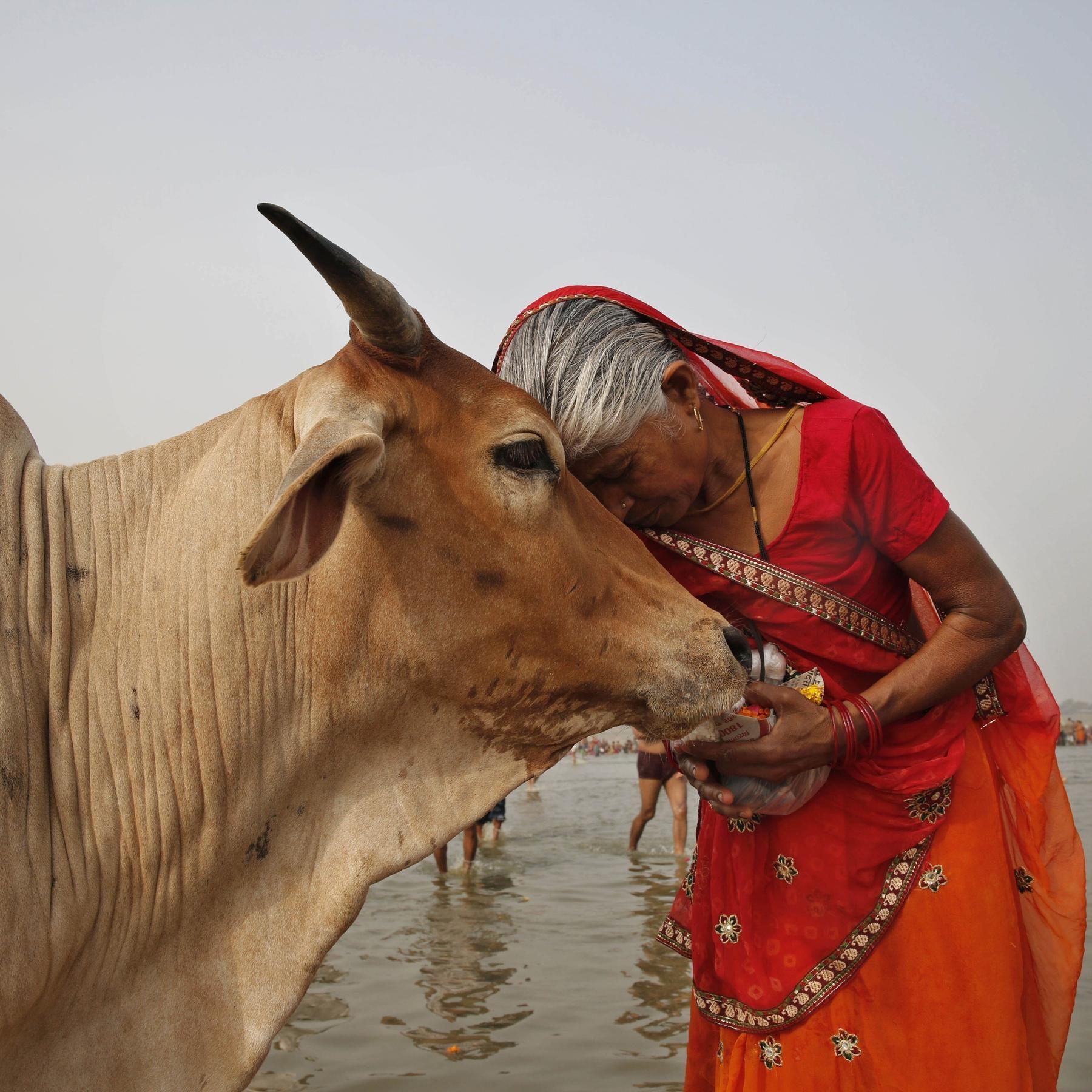 Das Tier und die Religion - Mitgeschöpf oder Mahlzeit?