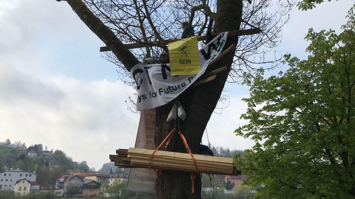 Klimaschützer haben einen Baum an der Passauer Innpromenade besetzt.