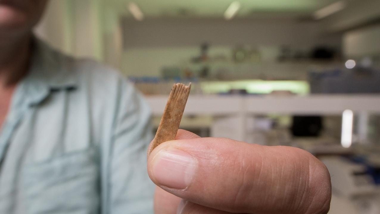 Wissenschaftler hält einen der Kämme des Tätowierungssets, das auf Tonga gefunden wurde.
