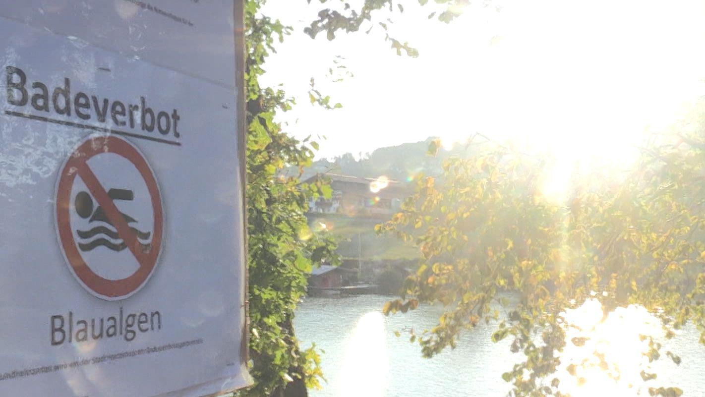 Schild: Badeverbot wegen Blaualgen