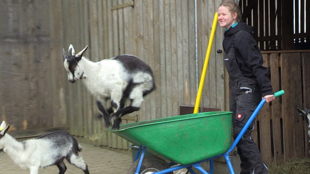 Ziegen-Züchterin Angelina Hehlinger schiebt eine Schubkarre, aus der eine Ziege springt.