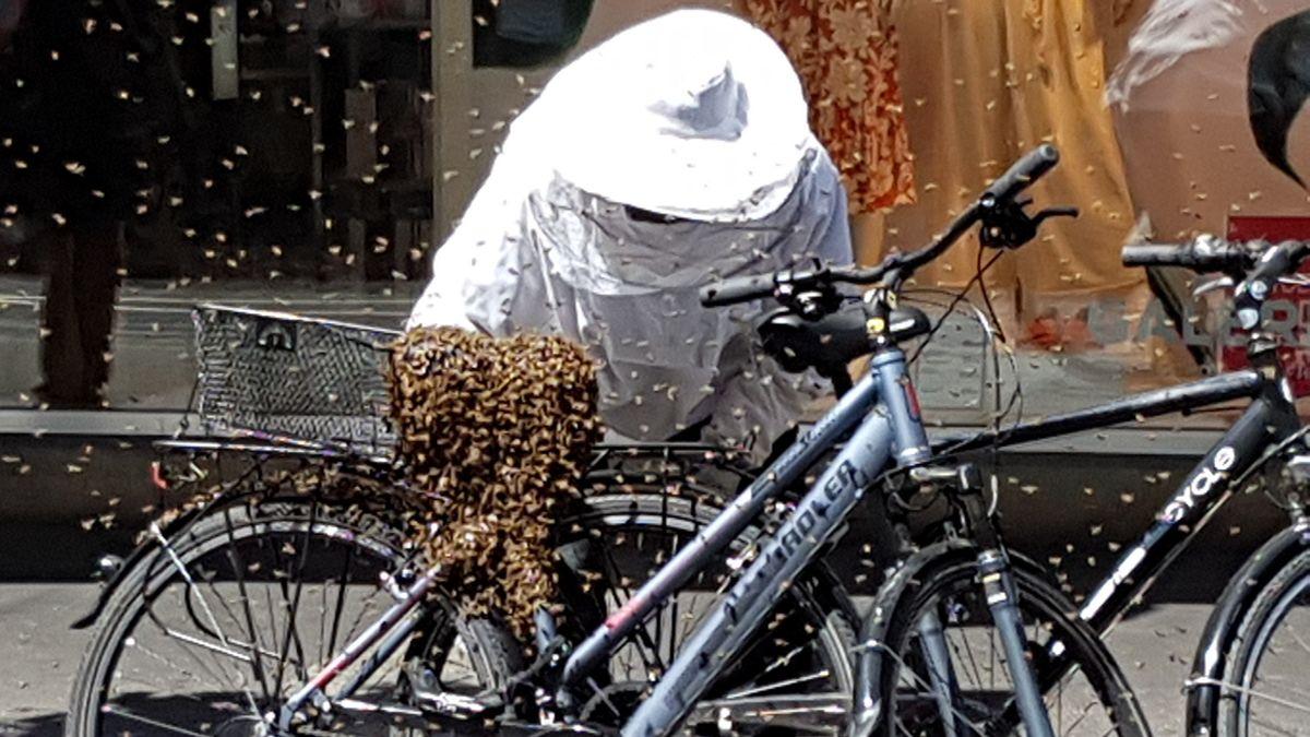 Bienenvolk an einem Fahrrad vor einem Würzburger Kaufhaus