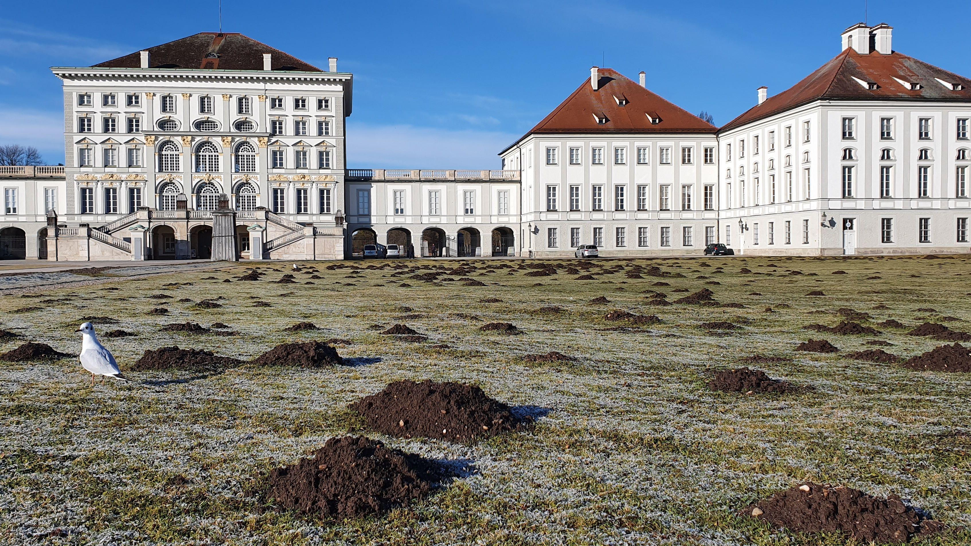 Maulwürfe wühlen im Nymphenburger Schlosspark