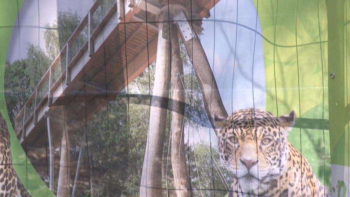 Eine Illustration des geplanten Waldpfades im Tiergarten, im Vordergrund das Gesicht eines Leoparden
