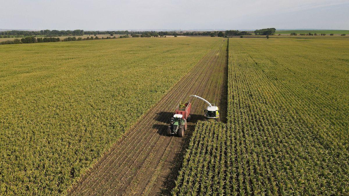 Eine Erntemaschine erntet Mais auf einem Feld