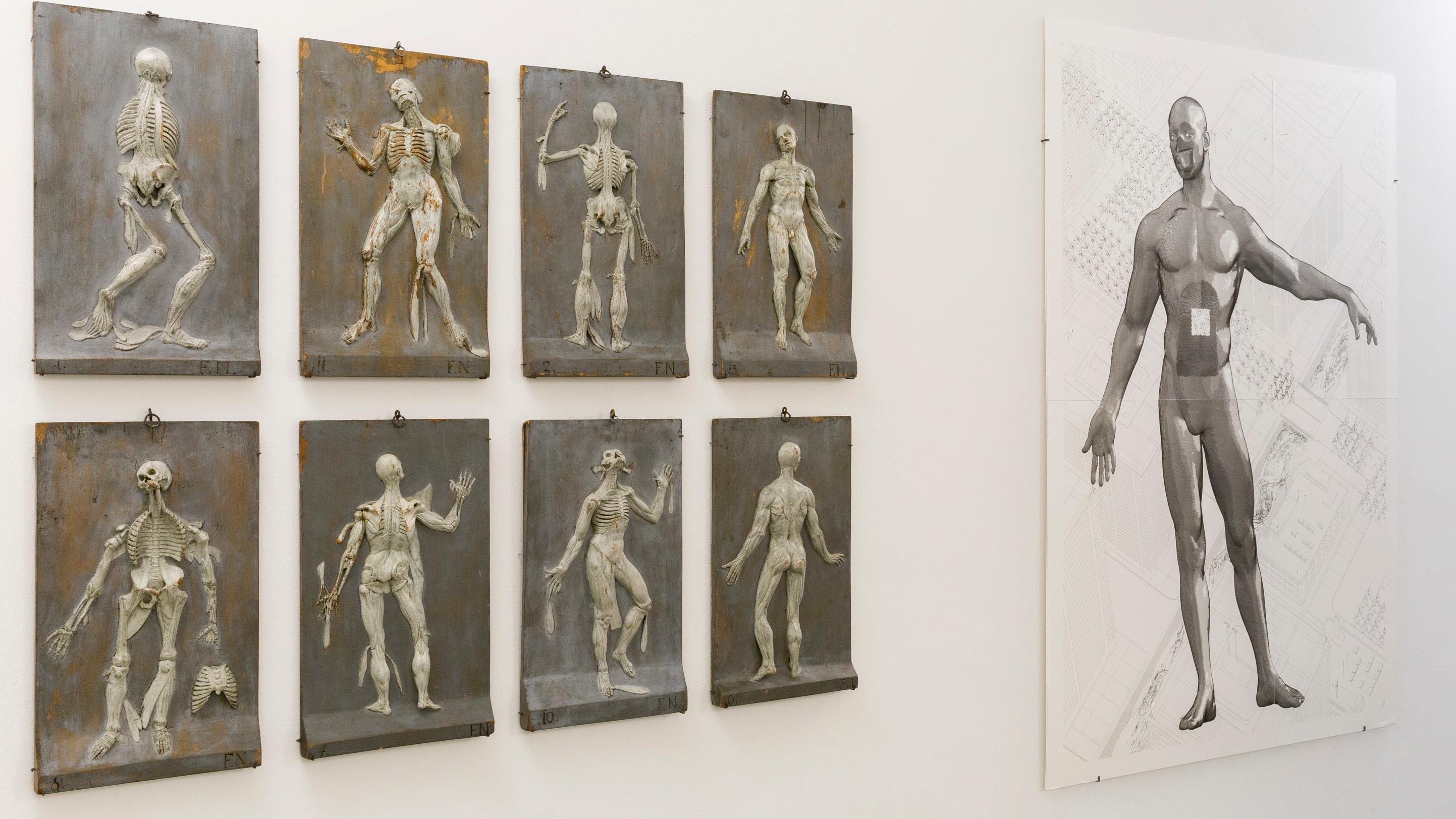 Links hängen acht, jeweils vier übereinander hängende, Relieftafeln vom menschlichen Skelett. Rechts hängt ein abstrakes Gemälde des menschlichen Körpers.