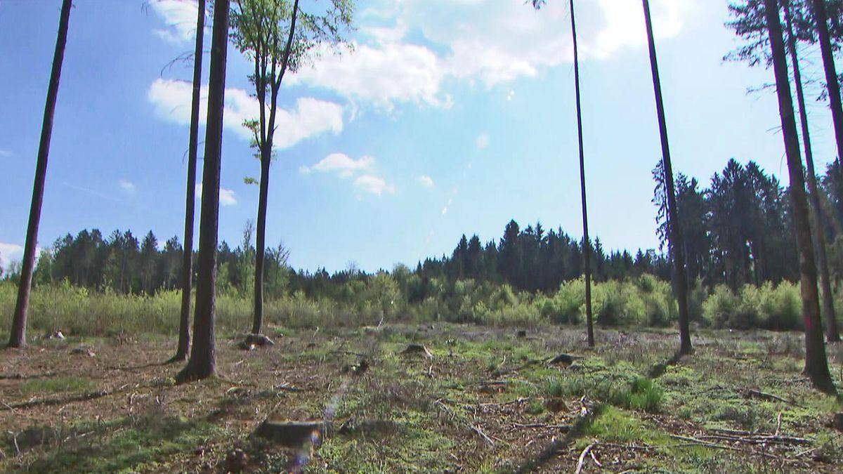 Trockenheit schadet dem Wald (Symbolbild)