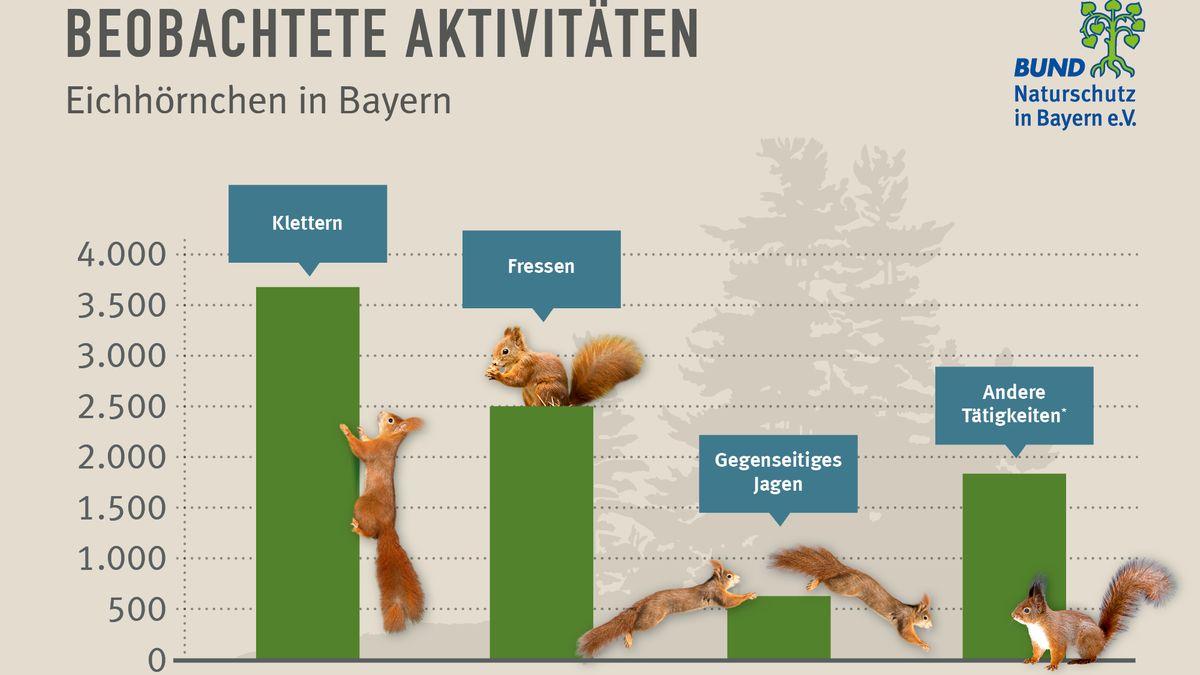 Die beobachteten Aktivitäten bei Eichhörnchen in Bayern