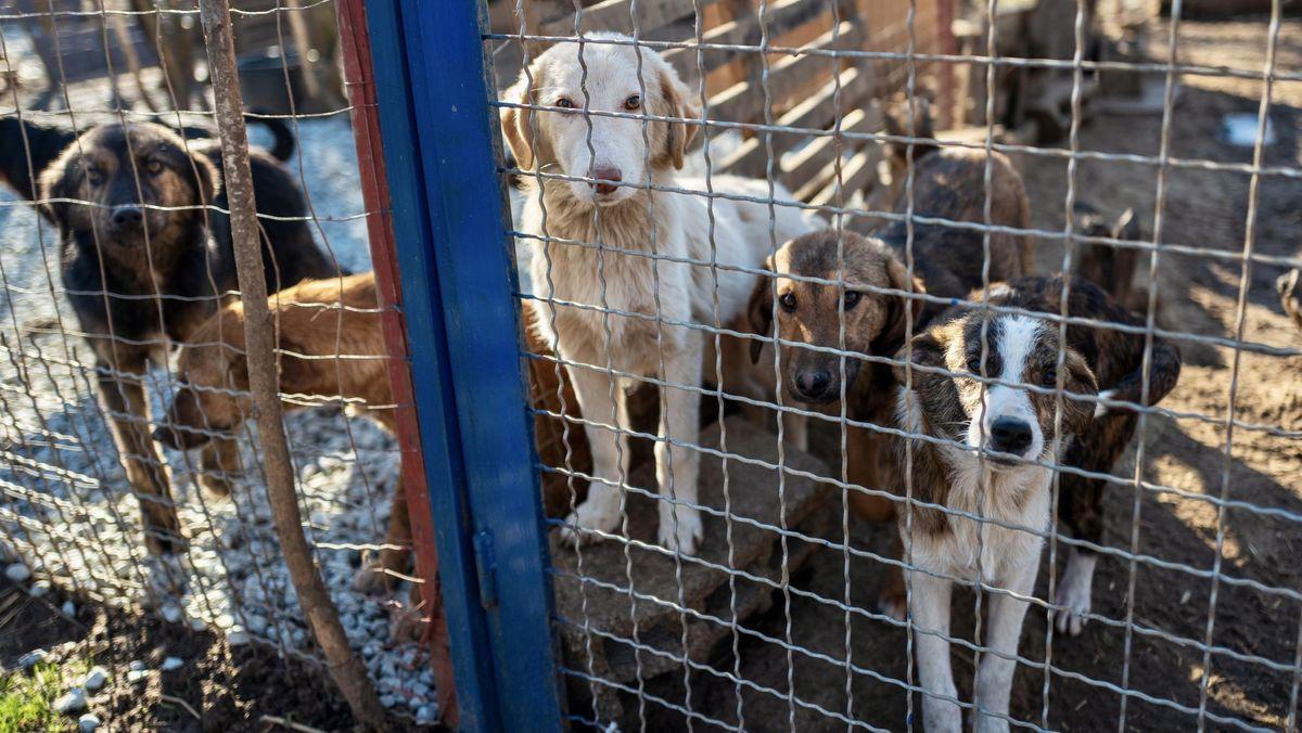 Das Bild zeigt fünf Hunde in einem Zwinger, die bettelnd schauen