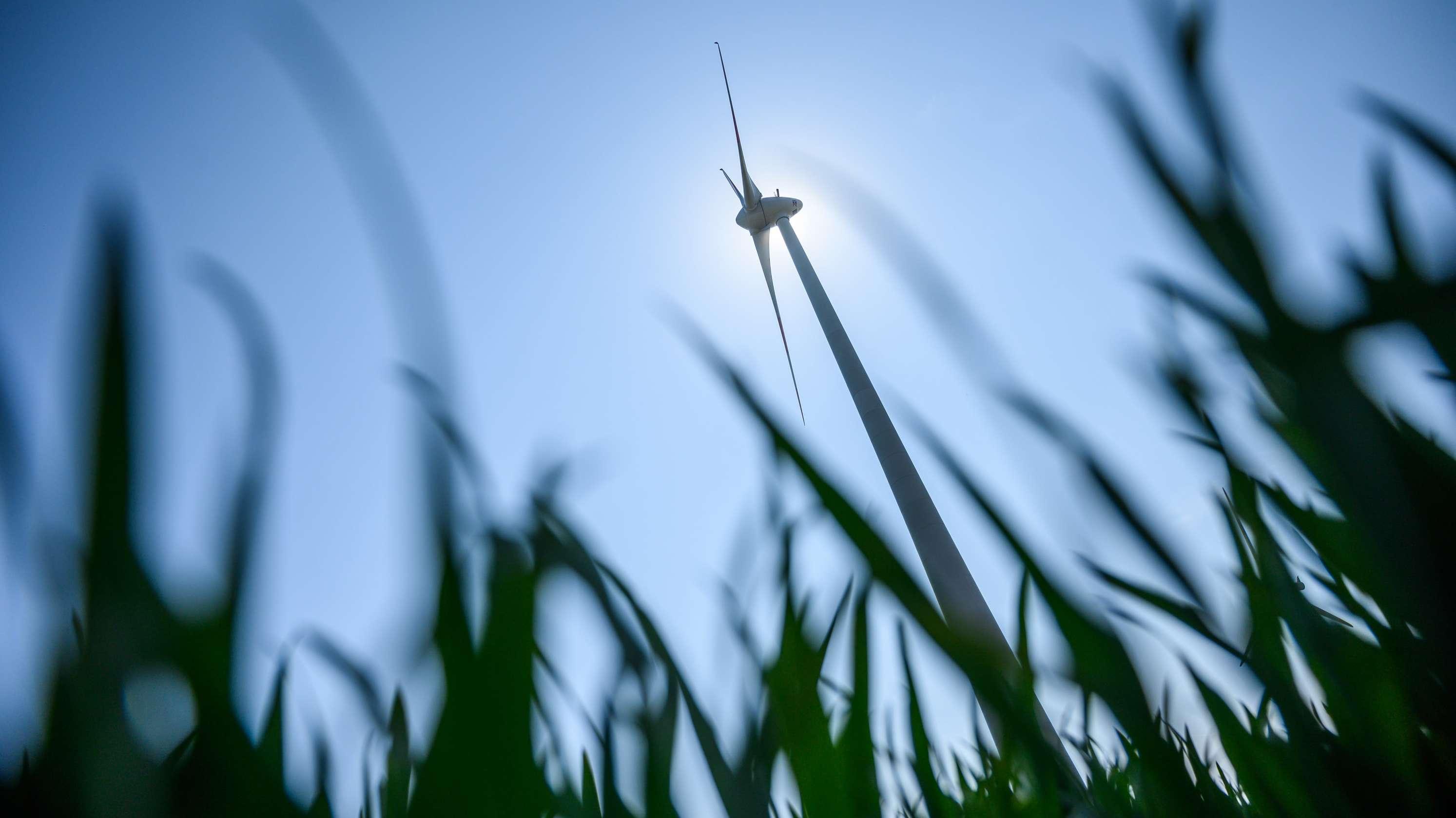 Hinter grünen Gräsern auf einem Feld steht ein Windrad