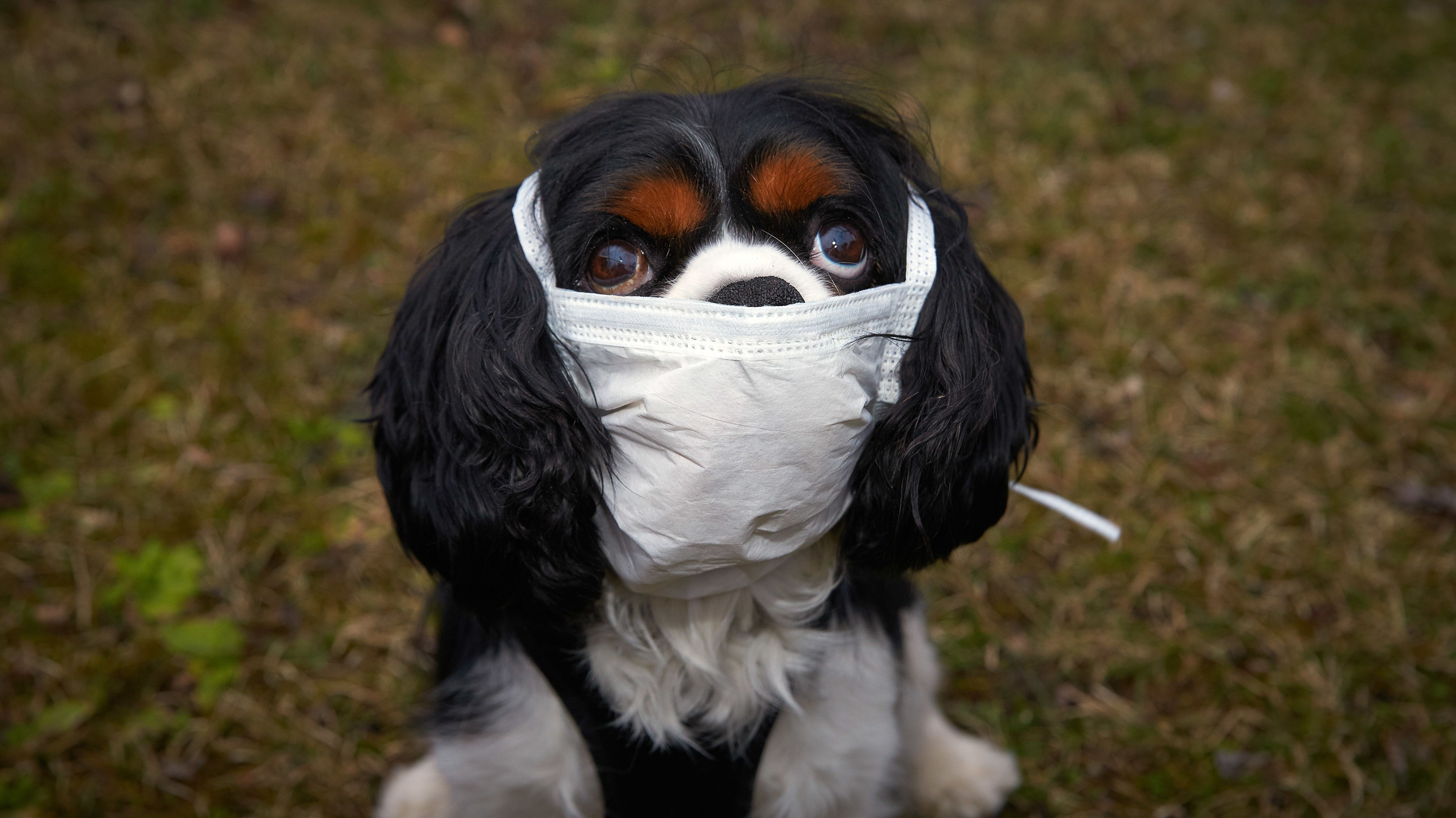 Hund mit Mundschutz.
