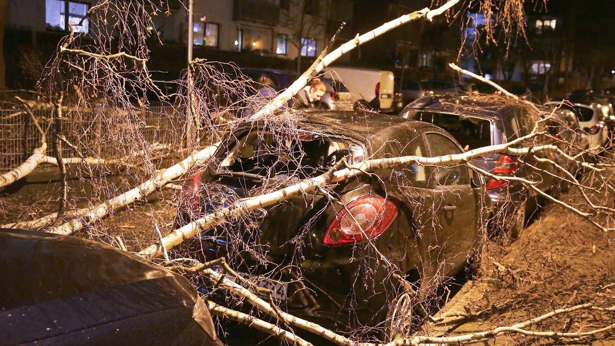 In Düsseldorf beschädigte eine umgestürzte Birke mehrere Autos.