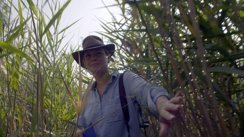 Ornithologin Andrea Gehrold streift durchs Schilf.