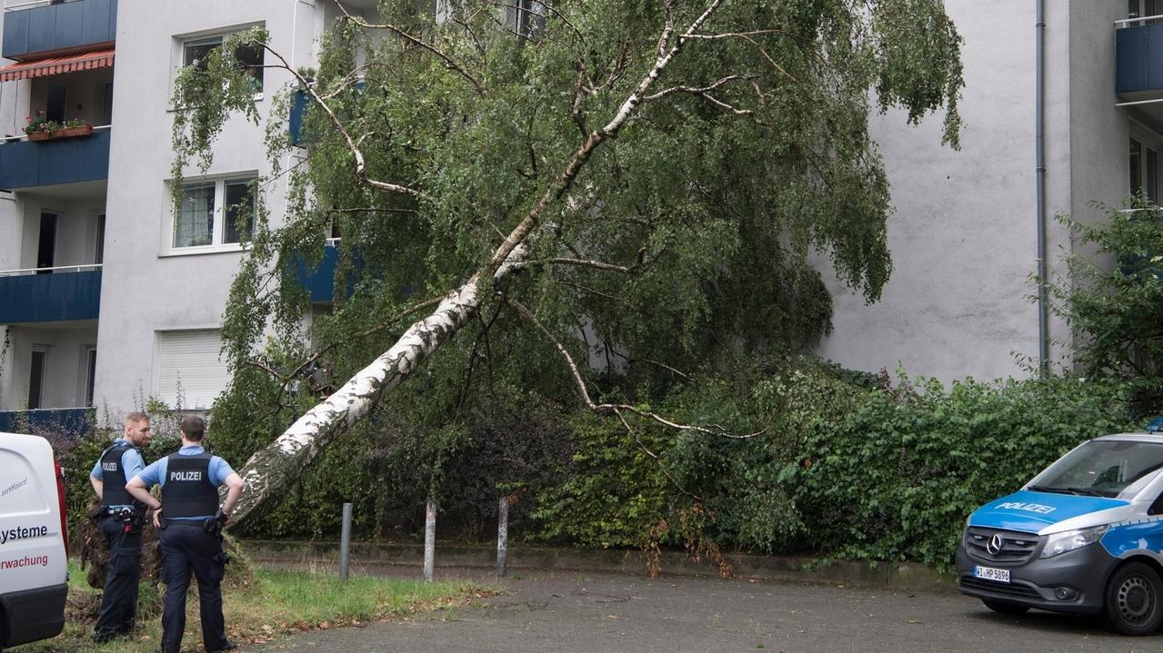 Ein umgestürzter Baum liegt an einer Hauswand