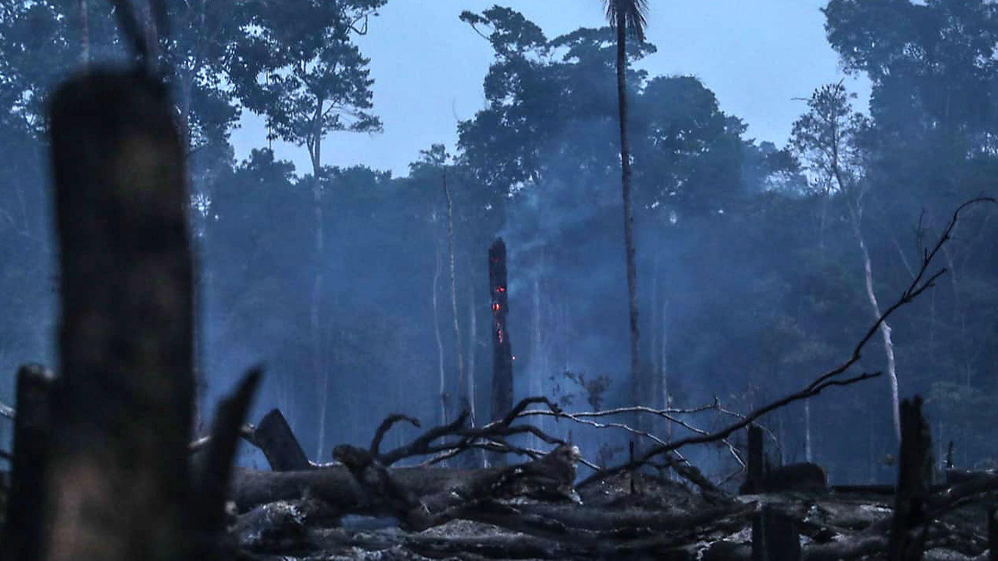 Schulze hält Fördergeld für Regenwald in Brasilien zurück
